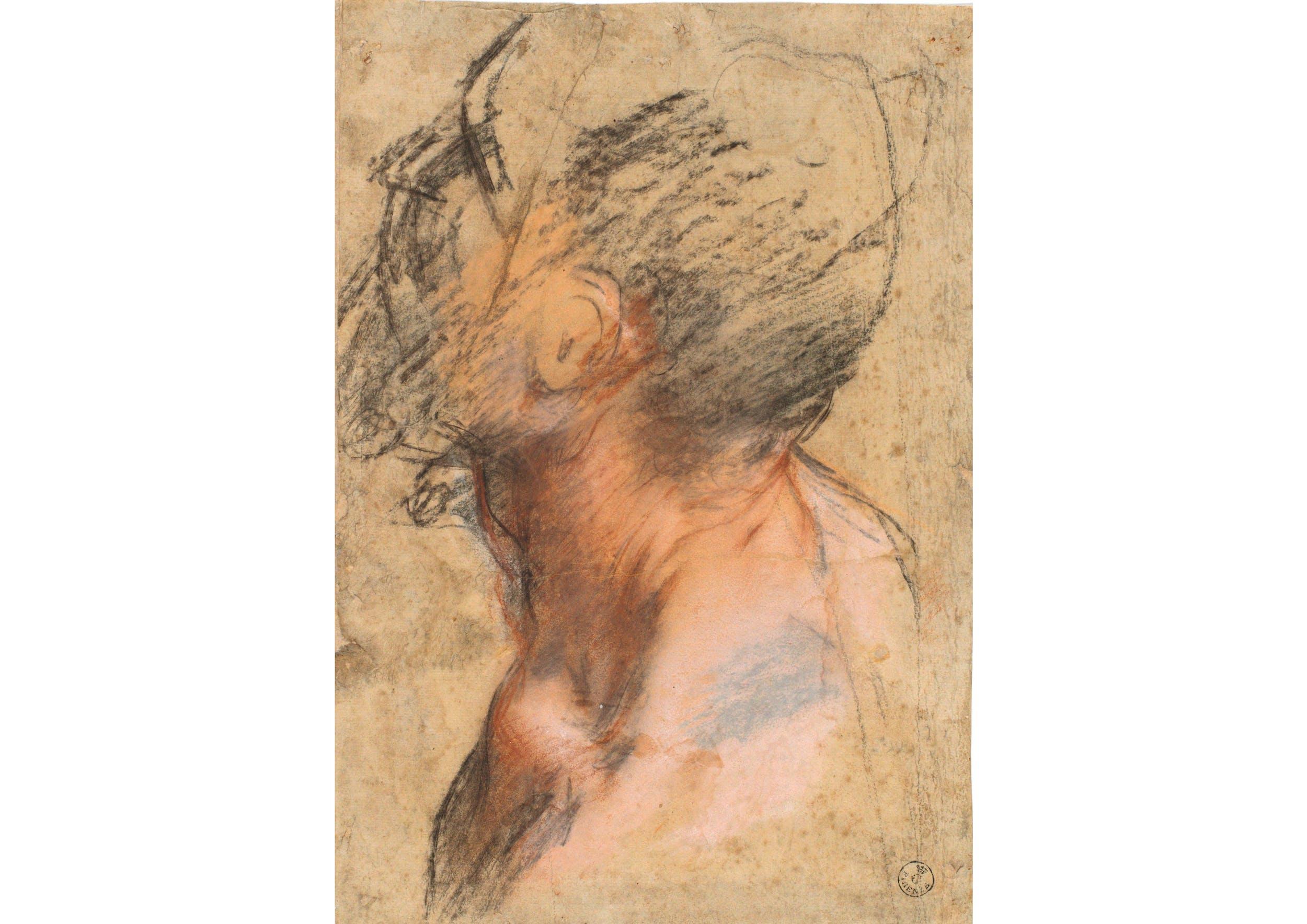 Carboncino, pietra rossa, pastello rosa, gessetto bianco, carta 325 x 224 mm. Inv. 11397 F