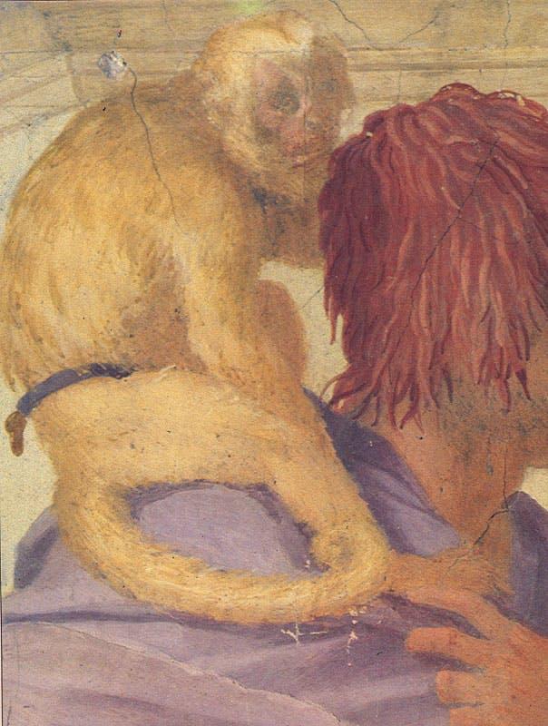 Cappuccino di Marcgrave, Sapaius flavius (Schreber, 1774), in un particolare dell'affresco Il tributo a Cesare (1519-1521) di Andrea del Sarto, villa medicea di Poggio a Caiano (Prato).