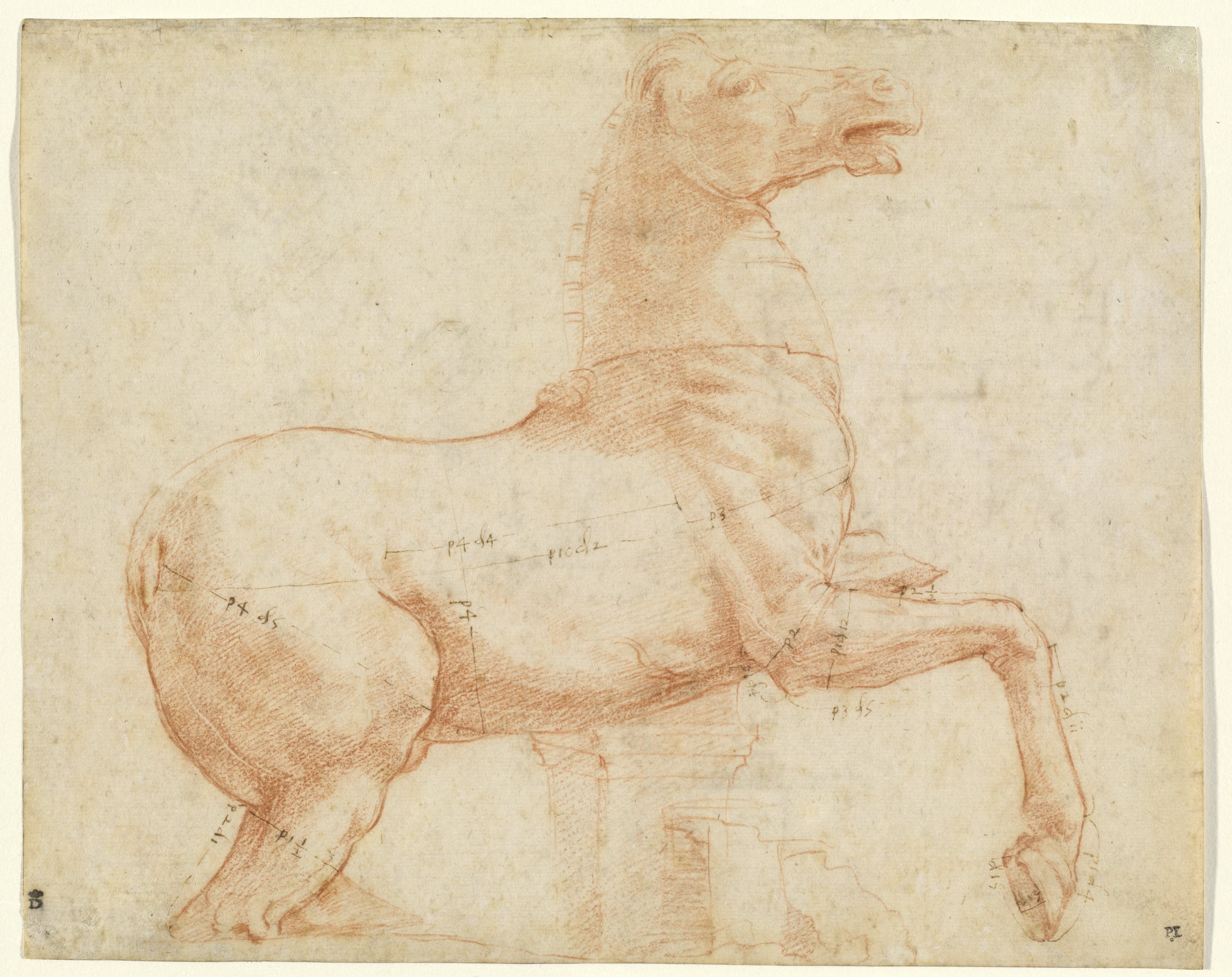 ) Raffaello Cavallo dell'antico gruppo dei Dioscuri sul colle del Quirinale Horse of hold group of Dioscuri on Quirinale hill 1513 circa pietra rossa, penna e inchiostro / red chalck, pen and ink Washington, D.C., National Gallery of Art