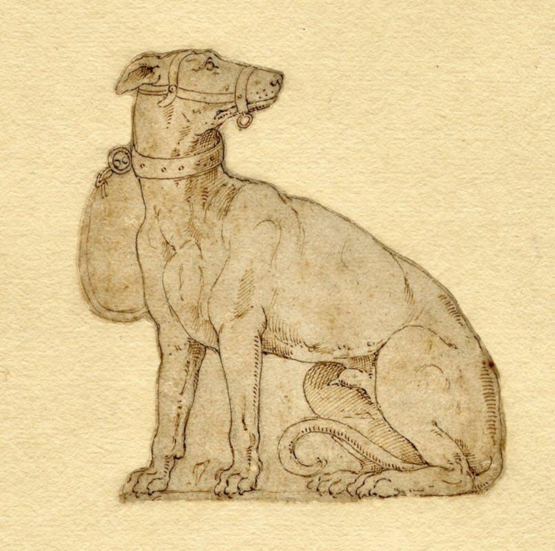 Scuola fiorentina del XV-XVI secolo, Studio di cane, penna e inchiostro su carta