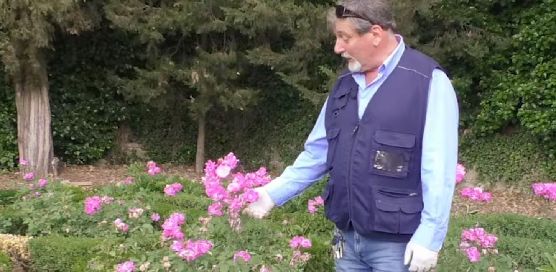 Le rose antiche di Boboli - I