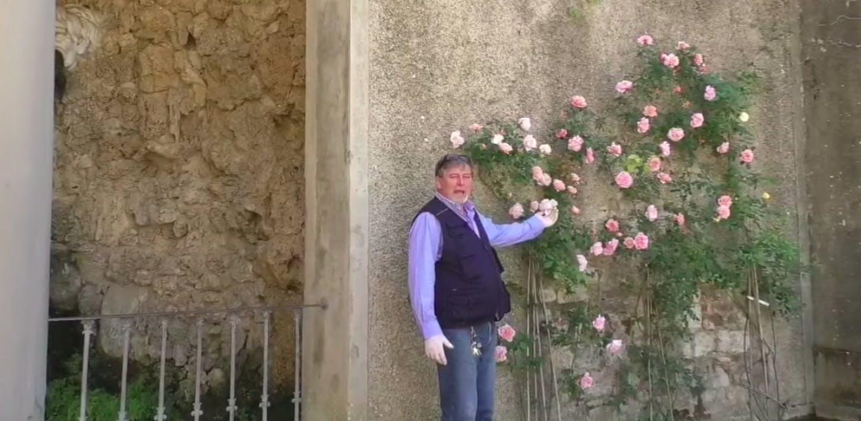 Le rose di Ivo - III