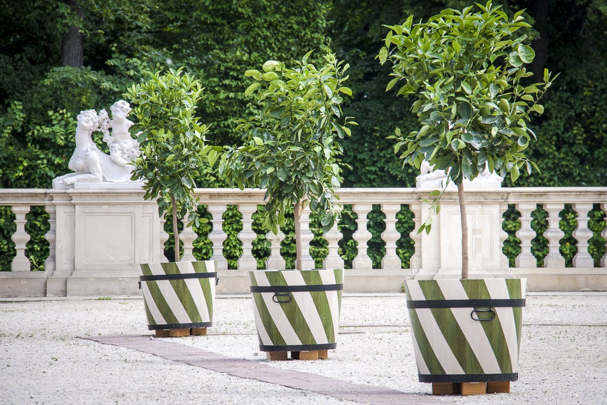 Citrus trees in the Baroque Garden of the Palace of Jan III, Wilanów