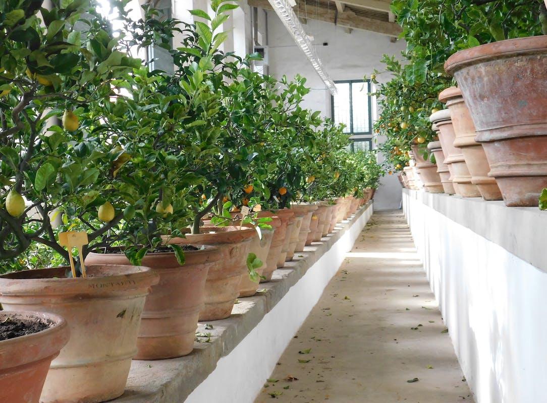 The Lemon House in Boboli Gardens