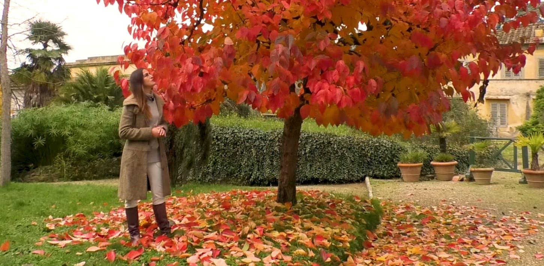 L'autunno nel Giardino di Boboli