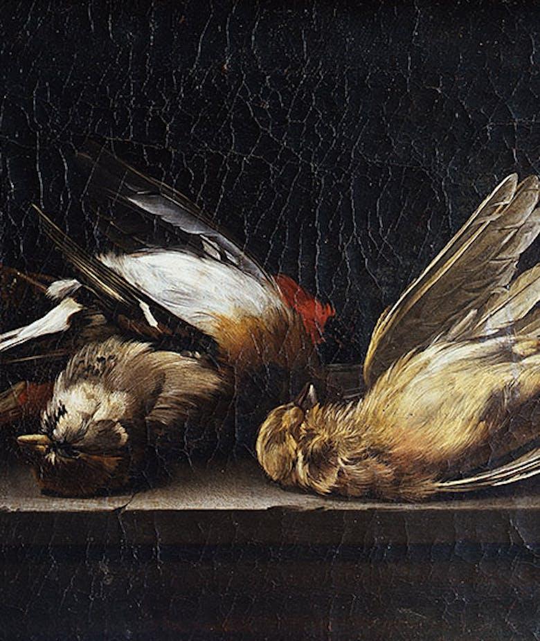 Natura morta: tre uccelli morti